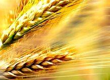 celiachia-sintomi-e-test-cura-della-celiachia-alimenti-per-celiaci-e-dieta-senza-glutine