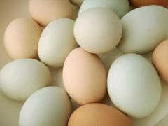 intolleranza-alimentare-alle-uova-le-ricette-delle-salse-senza-uova-per-condire-carne-e-pesce