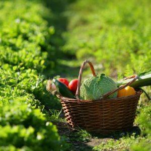 Benessere e salute: alimentazione e verdure